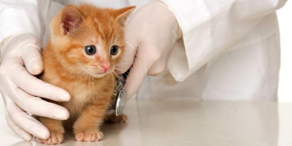 pet-insurance-claims